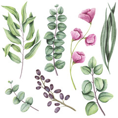 Botanical Set of Watercolor Herbs and Flowers
