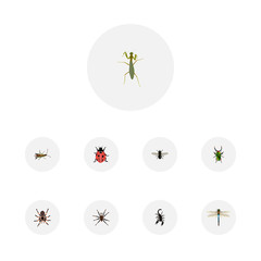 Realistic Arachnid, Damselfly, Ladybird And Other Vector Elements. Set Of Bug Realistic Symbols Also Includes Spider, Scorpion, Mantis Objects.