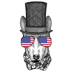 DOG for t-shirt design wearing cylinder top hat and glasses with usa flag United states of America flag