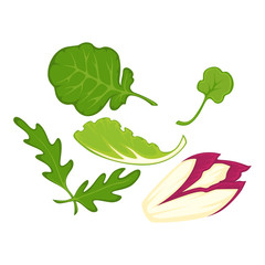 Healthy organic salad leaves cartoon isolated illusrations set