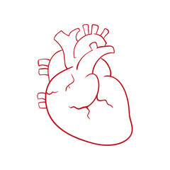 Human heart draw icon vector illustration graphic design