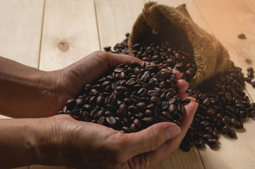 Woman hand holding coffee beans with sack bag on wooden background.