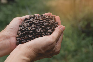 Woman hand holding coffee beans on nature background.