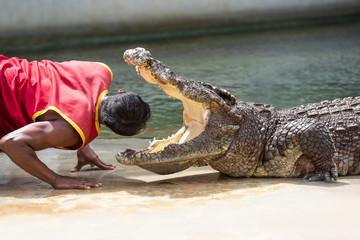 Papiers peints Crocodile Crocodile show