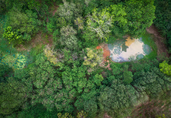 Aerial view forest