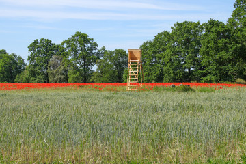 Hochstand, Mohnblumenfeld, Poppies