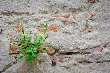 little plant  sprouting on the red brick old wall Wall mural