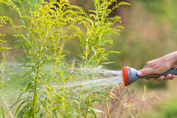 hand watering flowerbed