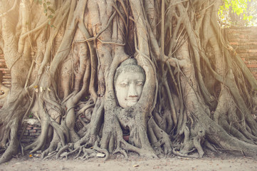 The head of ancient buddha statue in the tree roots in Thailand