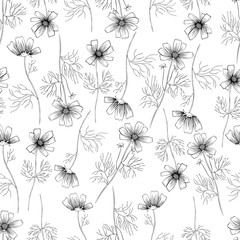 Kosmos flower, kosmeya hand drawn ink sketch, floral vector seamless pattern, graphic illustration, wild flower astra, design for greeting card, wedding invitation, cosmetic packaging, beauty salon