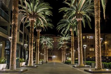 San Jose Palms