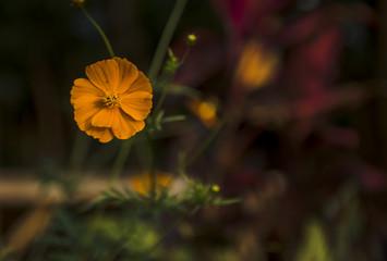 Beauty Yellow Flower