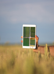 Man holding tablet with image in wheat field