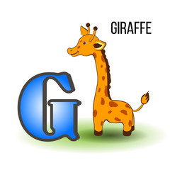 Cute Zoo alphabet G with cartoon giraffe, wild african kid animal vector illustration isolated on background, Education for children, preschool, ABC poster for learn to read, character design, mascot