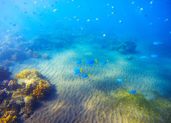 Underwater landscape with coral reef under sunlight. Young coral formation with fishes.