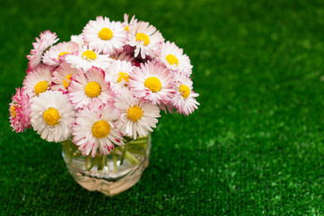 Bouquet of daisies, flowers on a green background, greeting card.