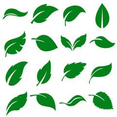 Green Leaves Collection. Set of leaf .Vector Illustration