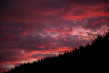 Dramatic sunset over forest.