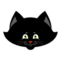 Black cat isolated. Sweetheart Kitten home pet