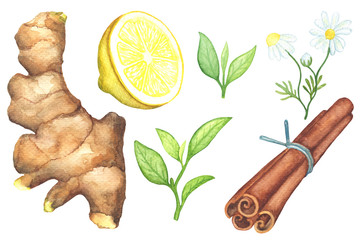 Ginger root, lemon cut, chamomile, cinnamon watercolor painting on white background.