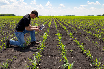 Agronomist Using a Tablet in an Agricultural Field Wall mural
