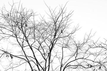Branch of dead tree, Black and white (monochrome) picture