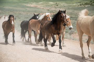 Herd of horses trotting along dusty road on long trail drive