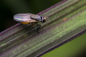 Fly standing on a leaf
