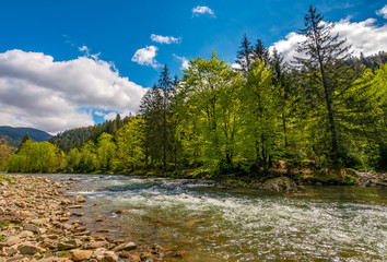 River among the forest in picturesque Carpathian mountains in springtime