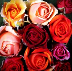 роза цветок яркий как фон текстура есть место для надписи