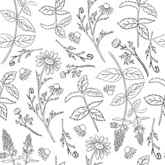 Seamless floral vector pattern, Mint leaves, peppermint buds, Chamomile wild field flowers isolated on white background, hand drawn daisy doodle illustration for design package tea, menu, medicine