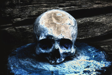 Real human skull on the background of a wooden wall