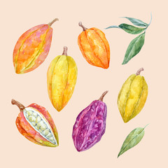 Watercolor vector cacao fruits set