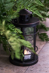 Green leaves of fern with a vintage latern. Rustic wedding decoration.
