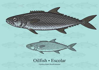 Oilfish, Escolar. Vector illustration for artwork in small sizes. Suitable for graphic and packaging design, educational examples, web, etc.