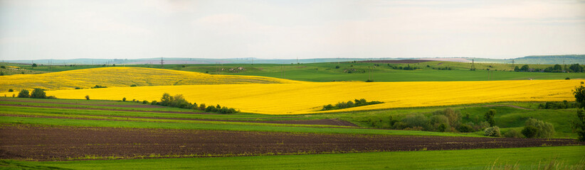Photo of rapeseed yellow field. Canola field in summer day.