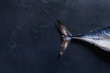 Tail of raw fresh whole tuna fish over dark wet metal background. Top view with space