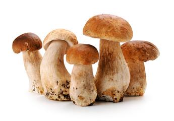 Mushroom of Cep o
