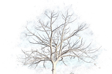 Abstract tree on watercolor background, Tree isolated