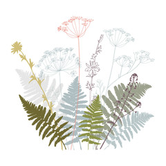 Vector floral illustration with  fern leaves, dill, chicory flowers and shepherd's purse plant .