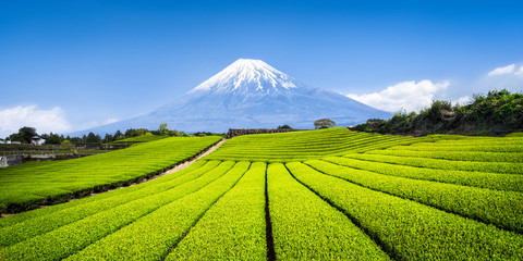 Teeanbau in Japan mit Berg Fuji im Hintergrund
