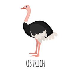 Cute Ostrich in flat style.