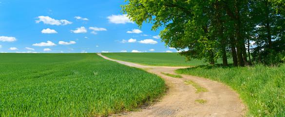 Feldweg durch grüne Felder und Wiesen unter blauem Himmel im Frühling