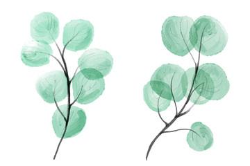 Watercolor leaves. Digital painting.