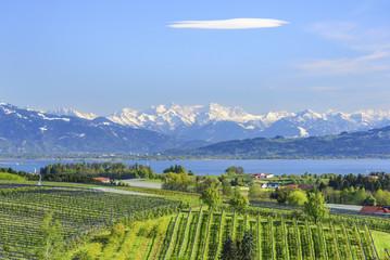 Wall Mural - Obstbau-Landschaft am Bodensee mit Blick auf den See und die verschneite Alpenkette