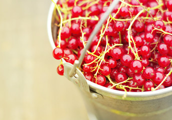 Juicy berries of red currant in an iron bucket, close up. Summer harvest of berries