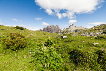 Summer alpine meadow mountain panorama