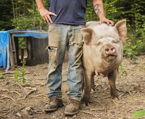 USA, Maine, Knox, Farmer stroking pig