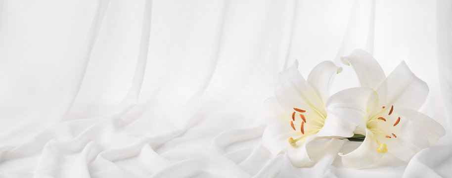 Lily flower on silky curtain