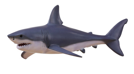Isolated shark with clipping path